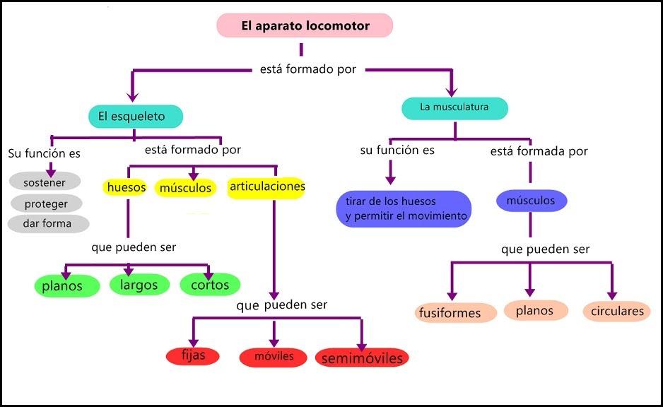 primer ciclo esteroides anabolicos