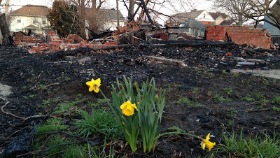 tulips rising from the ashes in Detroit
