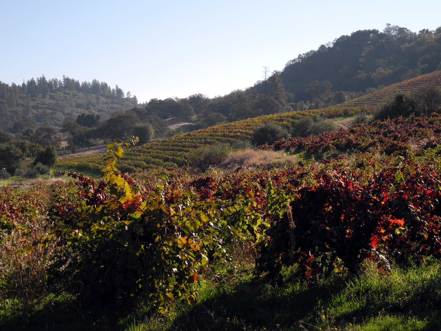 Mountain High Wines Quot It May Be The Best Zinfandel Year In