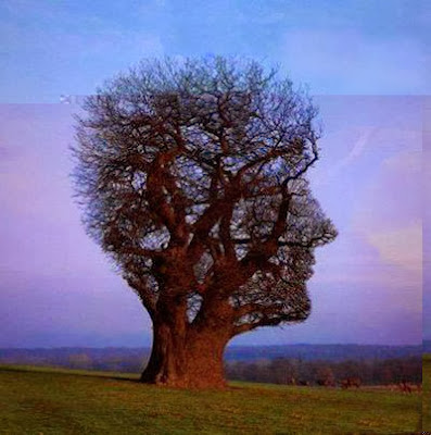 Human Face Tree