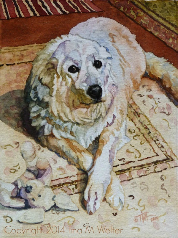 """Babe"" 8""x 6"" watercolor on 200lb coldpress paper, ©2014 Tina M Welter  Portrait of a Great Pyrenees dog."