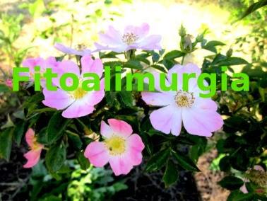 http://passatotralemani.wordpress.com/fitoalimurgia-in-rete-i-contributi-di-blog-e-siti/#comment-2135