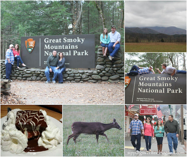 gatlinburg, cades cove, deer, smoky mountains