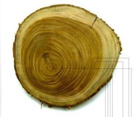pengertian kayu gubal, kayu teras dan lingkaran tahun