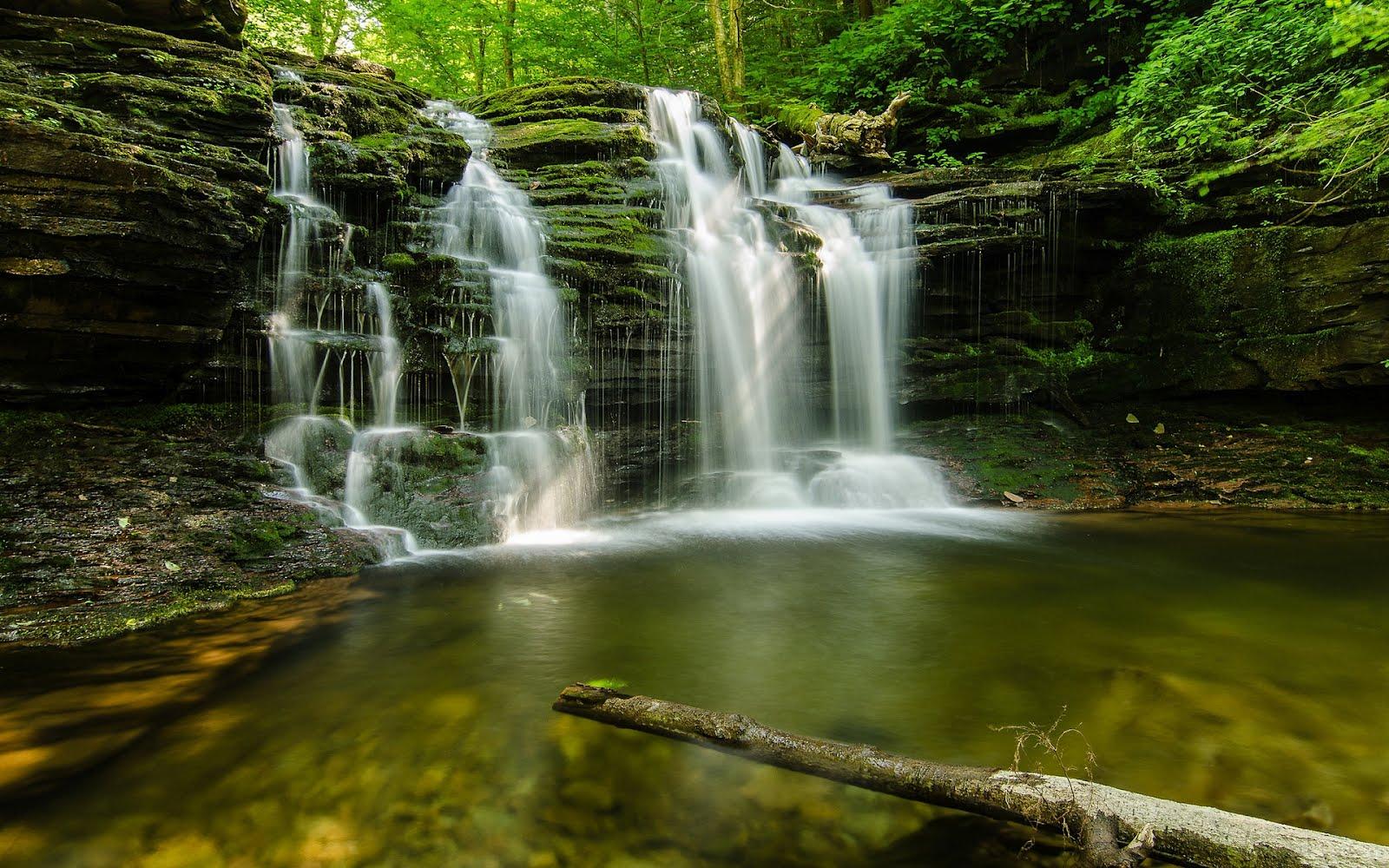 Banco de im genes cascada en el bosque forest for Fotos cascadas