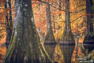 automne autumn in france trees et arbres zed photographie