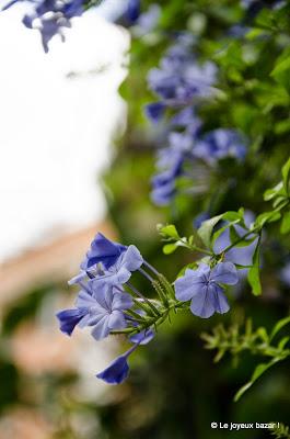 Rome - fleurs