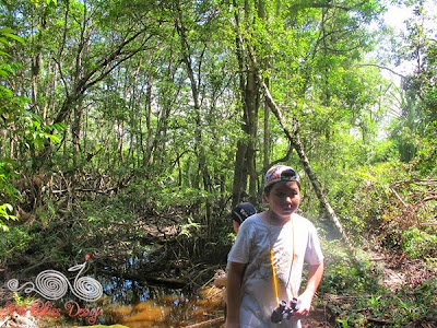 Lintang Trail Mangrove Forest @ Bako NP - WireBliss