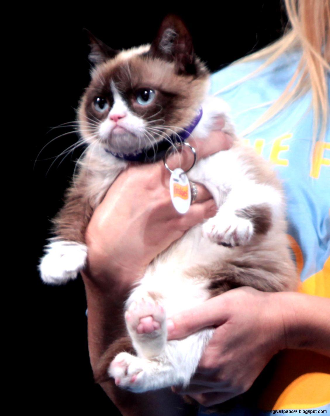 Grumpy Cat   Wikipedia the free encyclopedia
