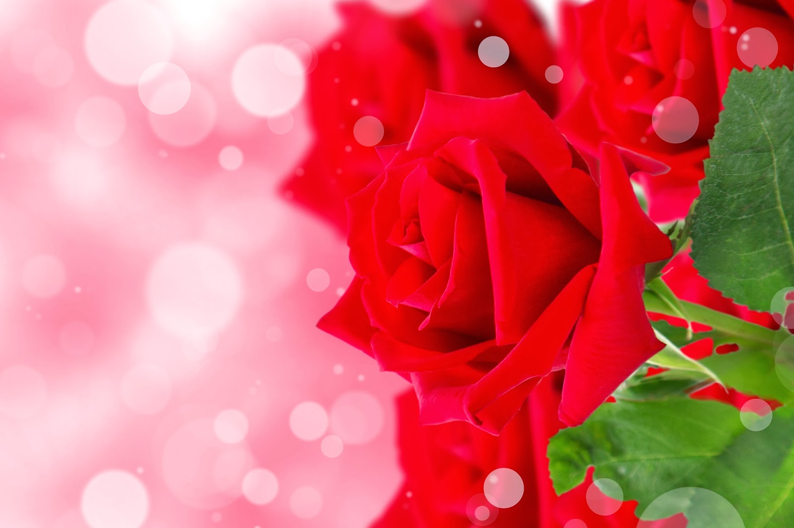 Rose-Greeting-card-Template-Invitation-card-Wishes-Quotes-HD-picture.jpg