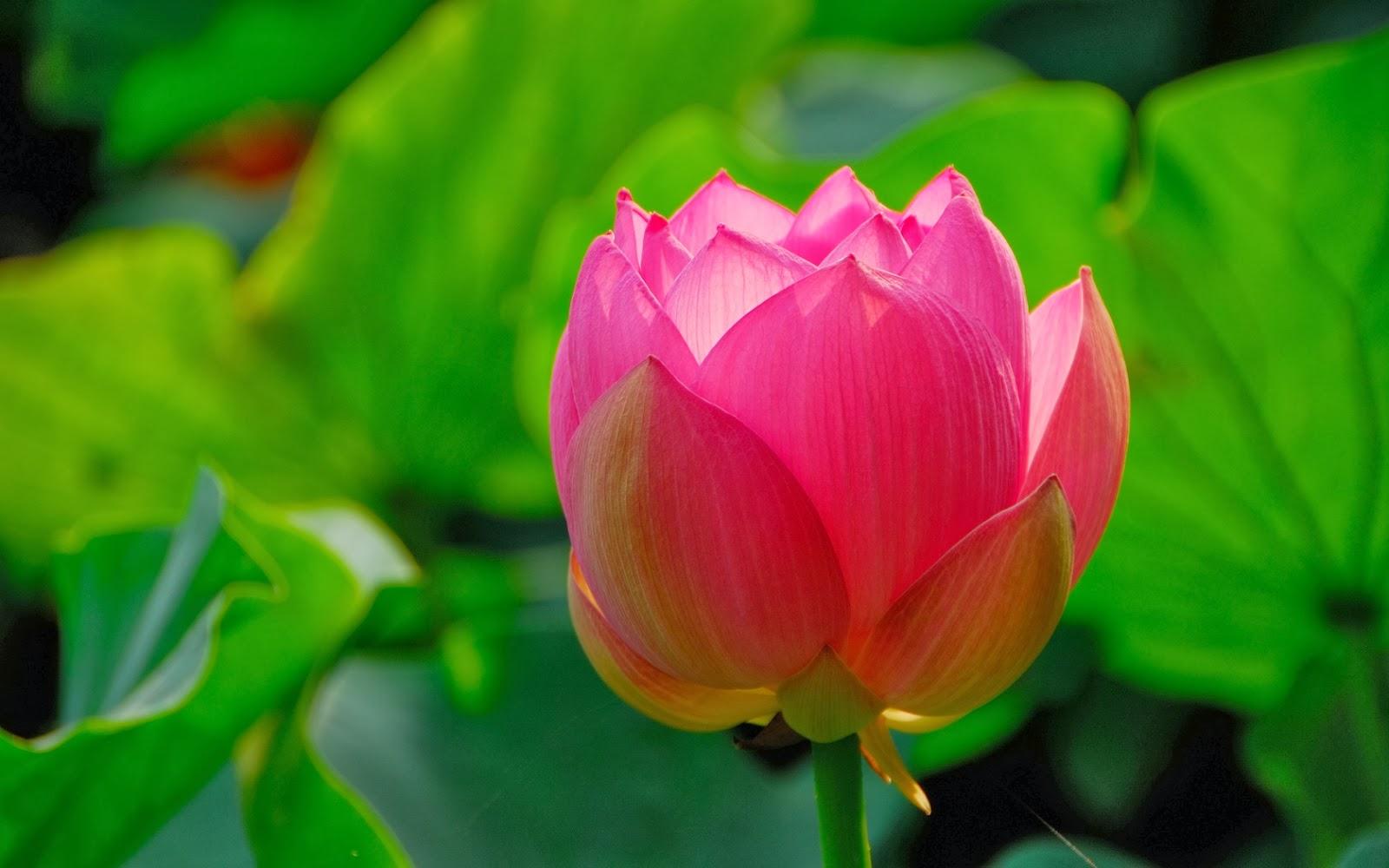 Flores lindas del mundo fotos bonitas de amor im genes - Flores mas bonitas ...