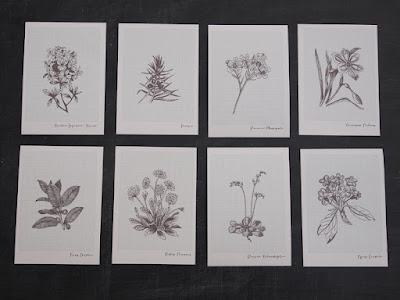 A6 botanical notelet cards at shop.alfies-studio.com