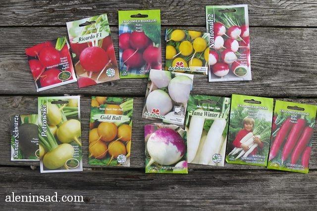 сорта, редиса, репы, дайкона, редьки, Raphanus sativus, семена, всходы, посев, уход, аленин сад
