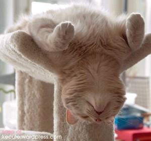 http://3.bp.blogspot.com/-t9qmYEOMCng/UJ3ZvF3VonI/AAAAAAAADiI/aCumIUX4lKs/s1600/kitten+sleeping+upseide+fown.jpg