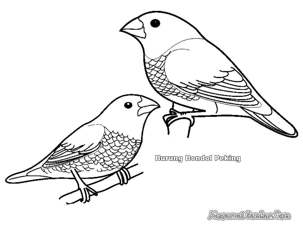 Mewarnai Gambar Burung Bondol Mewarnai Gambar