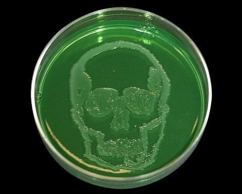 Jeg elsker mine gode bakterier!