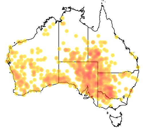 inland dotterel Peltohyas australis