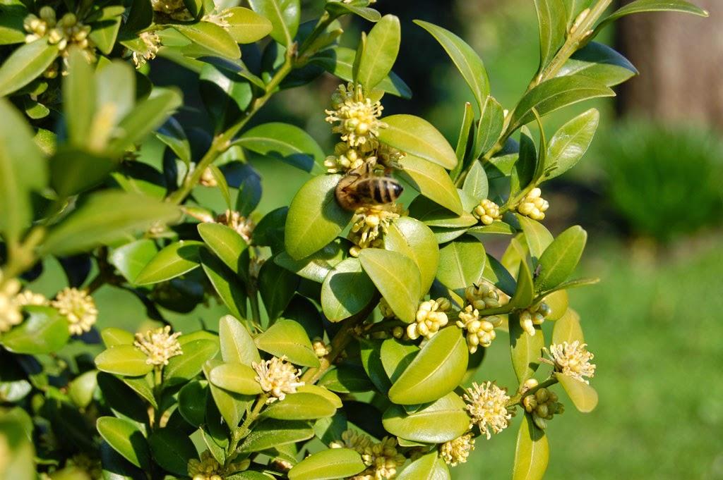 Bienen am Busch