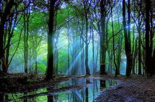 El espejo g tico historia y psicolog a del bosque encantado for Lo espejo 0450 el bosque