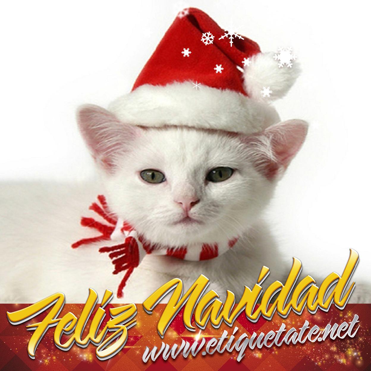 Imagenes Whatsapp Navidad - Fotos para Whatsapp