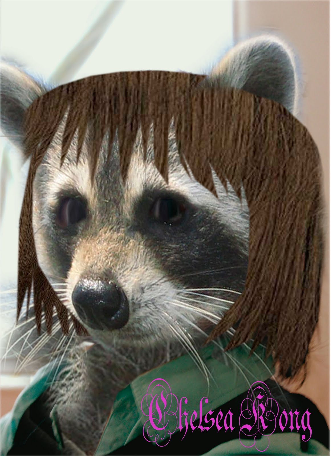 The gallery for --> Raccoon Without Hair Raccoon With No Hair