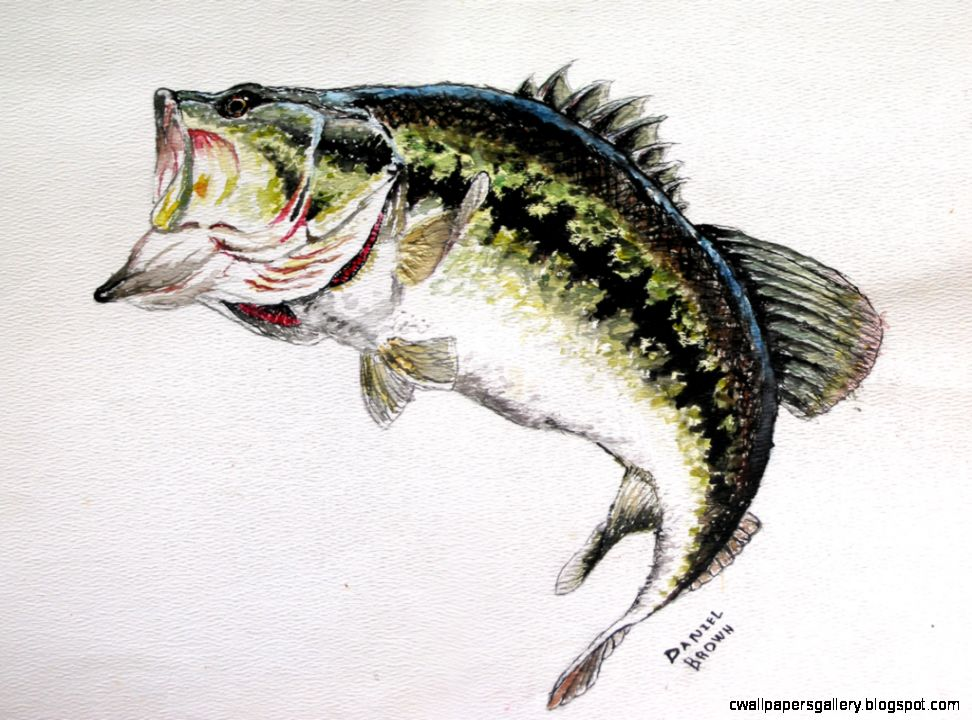 Largemouth bass jumping drawing wallpapers gallery for Bass fish images