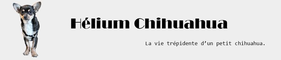 Hélium Chihuahua