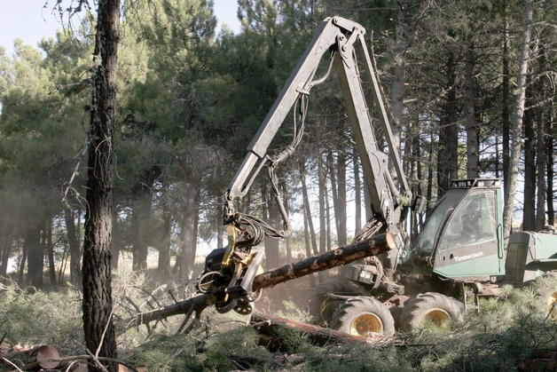 Ambiente y sustentabilidad no a la tala de arboles for Tala de arboles madrid