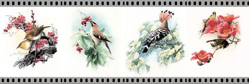 นกที่นิยมเลี้ยง