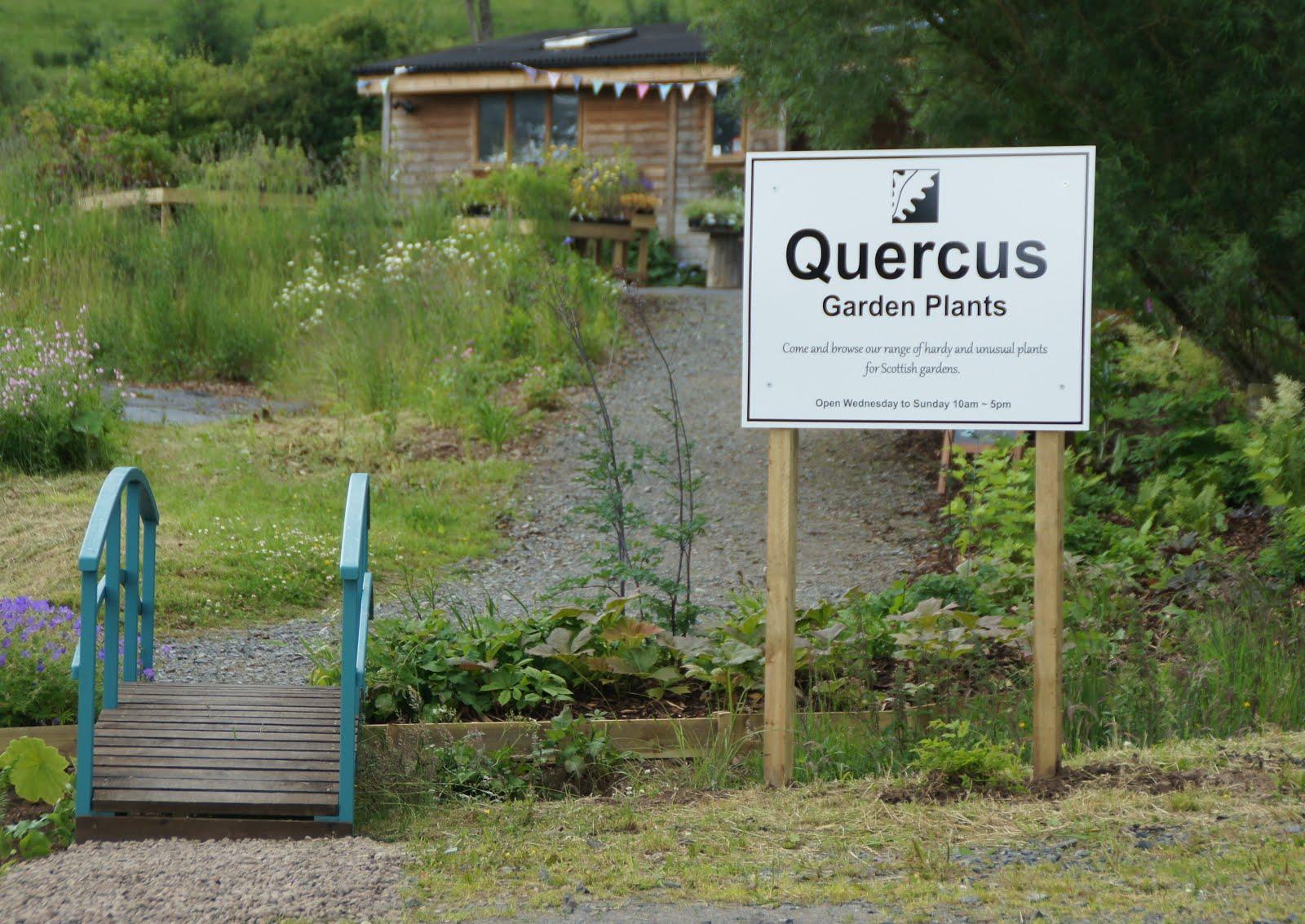 Quercus Garden Plants Facebook