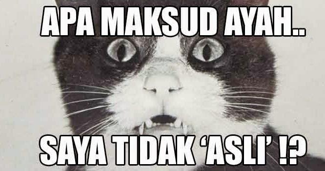 Kucing Original?   Alam Kucing