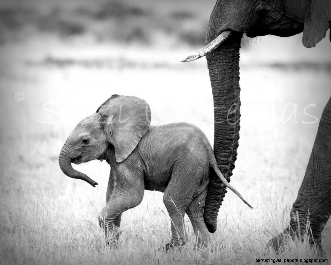 View Original Size Baby Elephants Black And White Wallpaper