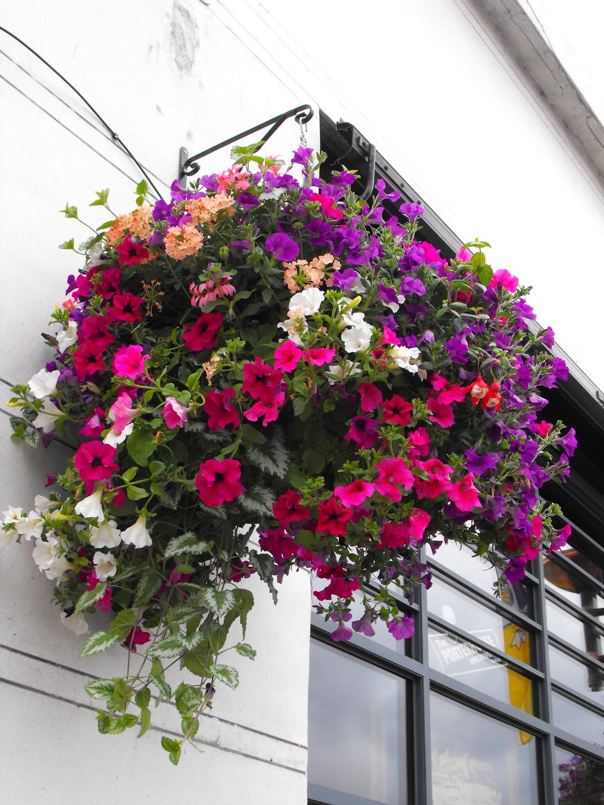 Granny gaules garden summer hanging baskets Hanging basket flowers