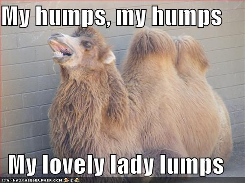 funny camel photos 2011 all funny