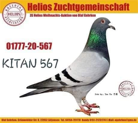KITAN567