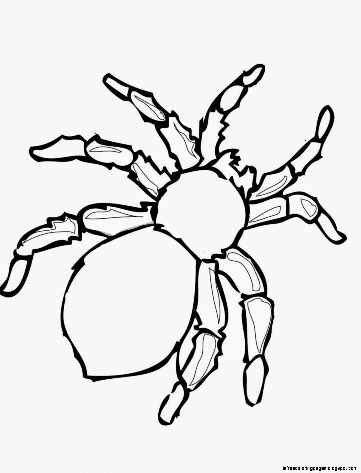 picture about Printable Spiders called Spiders Coloring Web pages Free of charge Coloring Web pages
