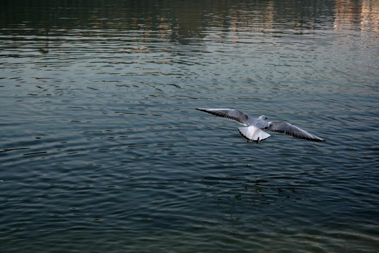 Black swan et amuse geule.
