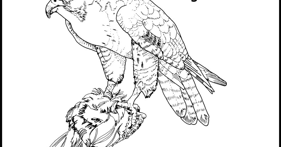 Hawk Coloring Pages Minister