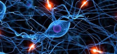 нейронная связь