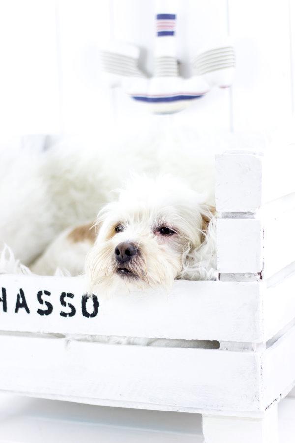 Glücklicher Hund im selbst gebauten Hundebett