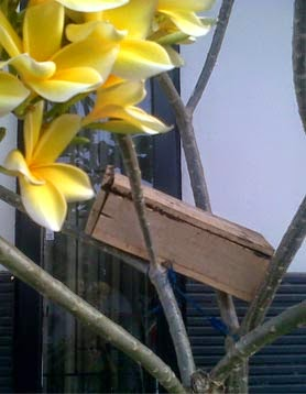 madu-trigona-lombok