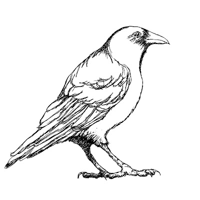 Easy Crow Drawing