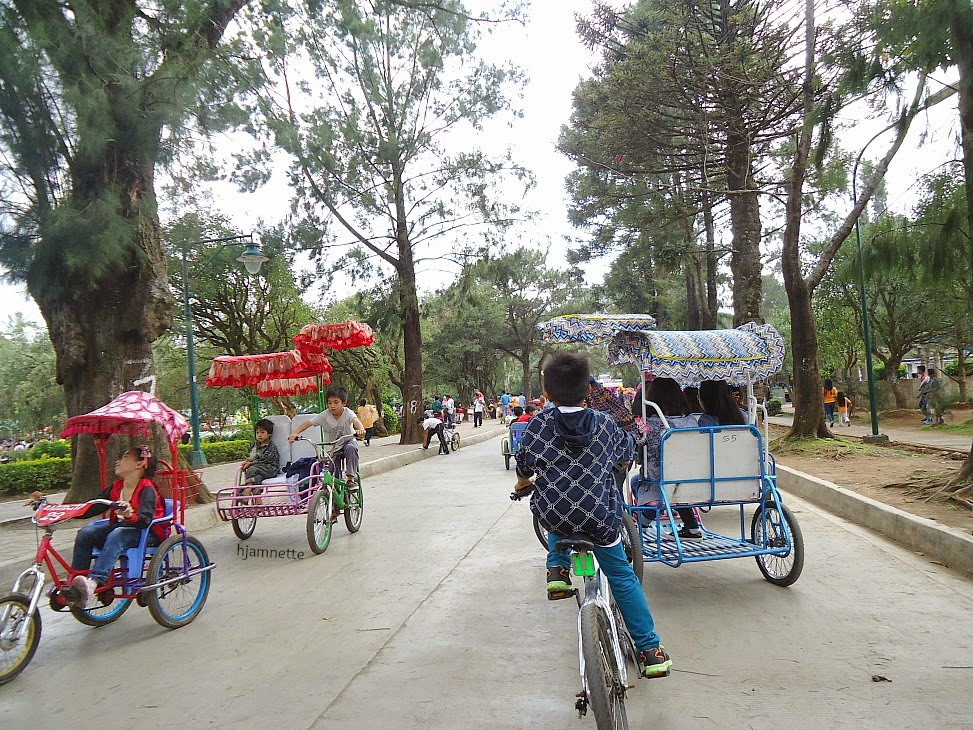 Baguio City, Travel, Burnham Park, Mines View Park, Strawberry Farm, La Presa, Strawberry, Pine Tree, Philippines