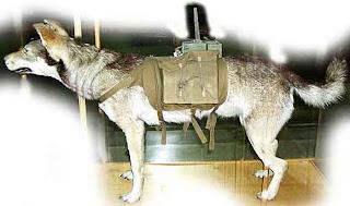 perro mina sovietico un perro adiestrado con una bomba que se situaba debajo de los tanques para explotar