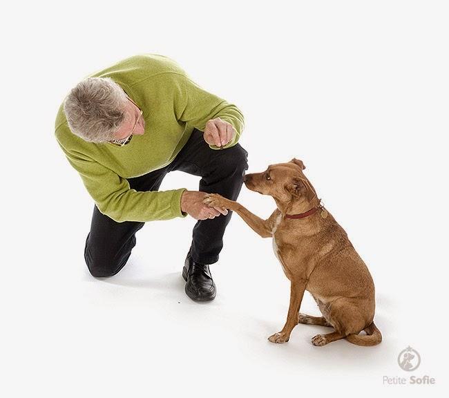 Adestre seu cão: programa de obediência