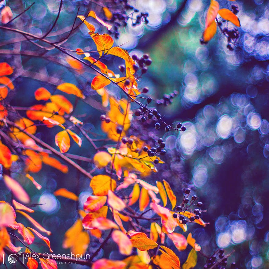 Purplish nature photography