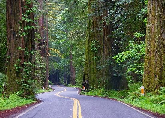 Drive Beneath Breathtaking Pillars Of Enormous Coast Redwoods On This 31 Mile Long Route From Redway To Weott Ca World Famous Scenic Old