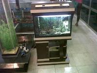 bibit ikan pekanbaru