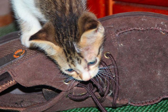 Ragam Si Kucing Mencuit Hati
