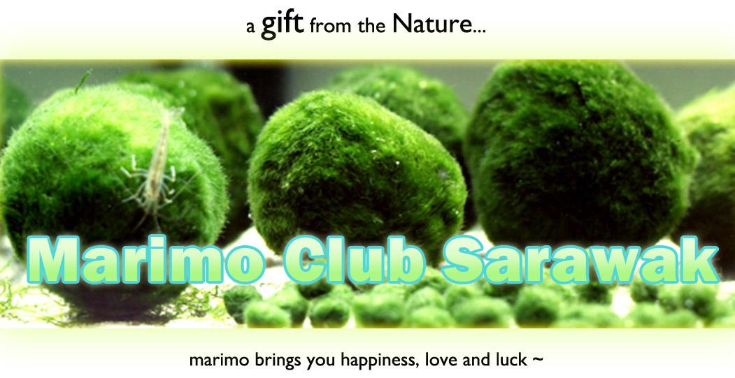 Marimo Club Sarawak